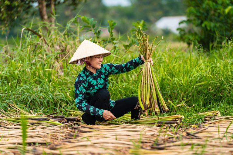 Plume de Bambou de juillet